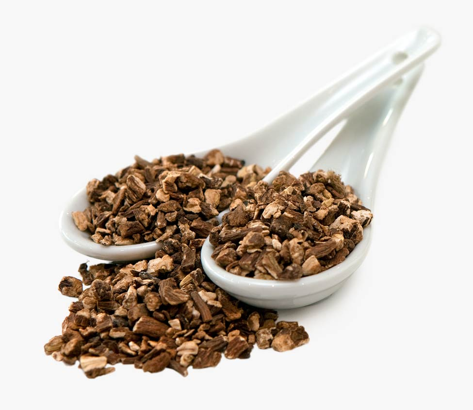 dandelion root hindi