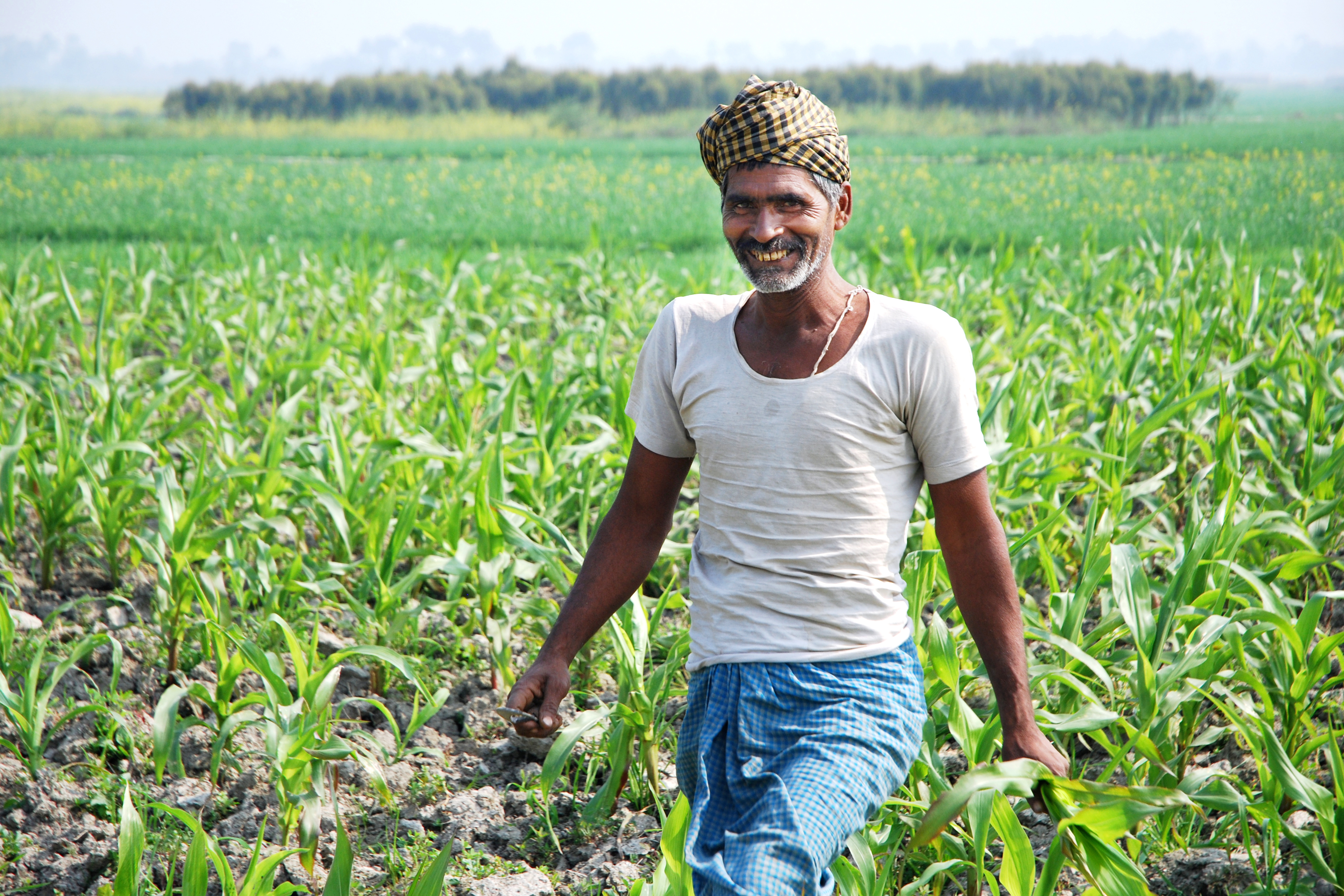 an essay on indian farmer Problems faced by indian farmers in hindi| essay on farmers problems in hindi| the farmer topic in hindi| essay on bhartiya kisan in hindi language| 5 sentences about farmer.