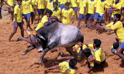 Jallikattu: Protests and Anti-Nationalism