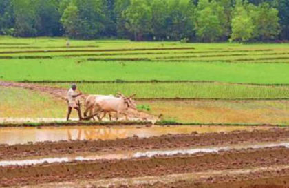 India's Rural Sector